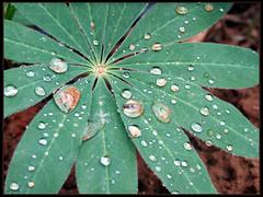 Water drops - טיפות מים