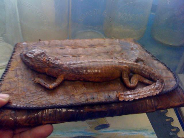 Header of alligator purse