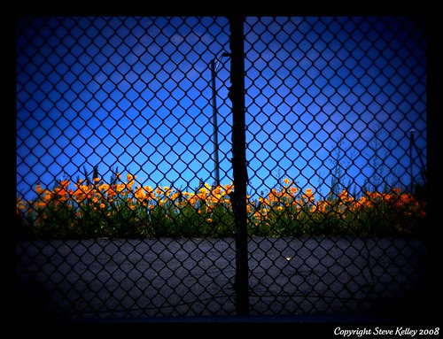 flowers ikea fence geotagged newjersey nikon elizabeth nj wildflowers newark ewr wildflower hdr lomoeffect newarkinternationalairport coolpix8700 photographyprohibited mudpig stevekelley elizabethnewjersey