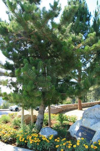 George Harrison Tree