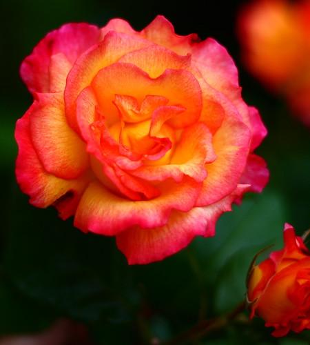 Kent Road Flower 01