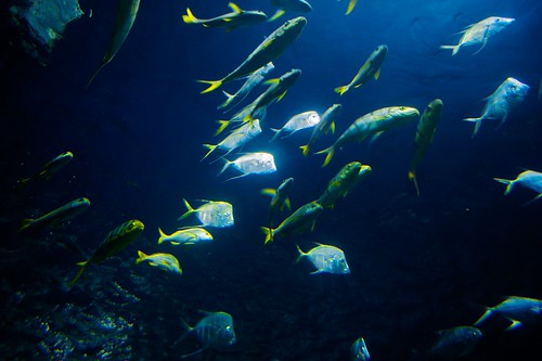 Underwater Tank