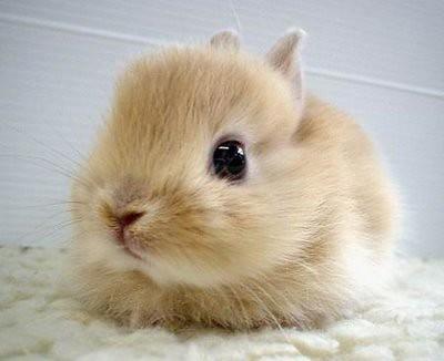 VERY cute bunny!!