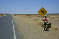 Nancy with Lllama crossing sign