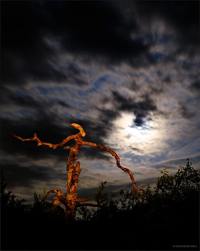 sky moon lightpainting tree night austin oak texas tx moonlit nightsky moonglow deadoaktree top20texas bestoftexas oscote oxherder
