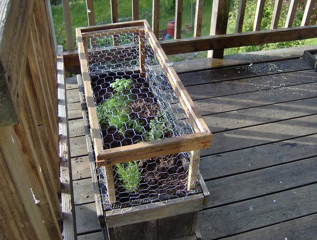 Squirrel Proof Herb Garden Flickr Photo Sharing