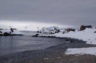 009 Wandeling Halfmoon Island - kinbandpinguins