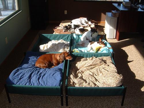 2008-02-10 - Sun Dogs0003