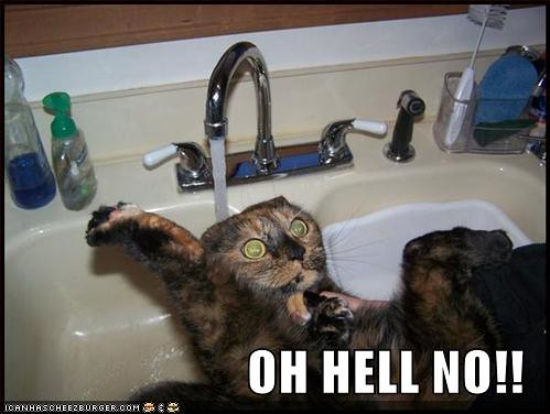 funny-pictures-cat-scared-sink-water1