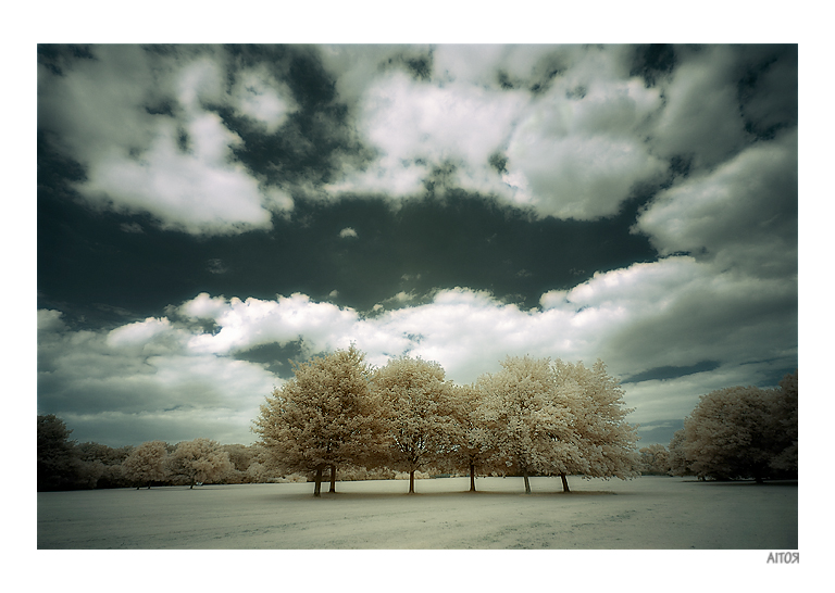 6 trees infrared