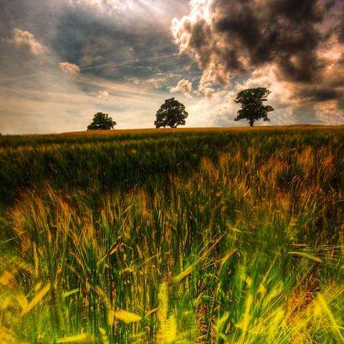 3 tree grass clouds rural 350d mosaic canon350d frontpage hdr österlen lucisart lucis ystad uncommon 500x500 photomatix sigma1020 tonemapped 3exp landscapeset marcusclaesson