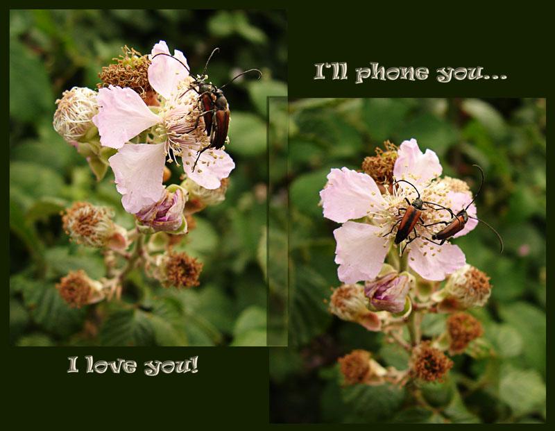 ¡Te quiero!               //              Ya te llamaré....