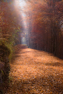 Path in the Wood - Sentiero nel bosco