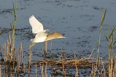 Egypt - birds on the Nile