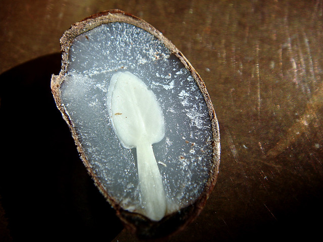 2009 - A Spoon In My Persimmon (seed). Very cool.