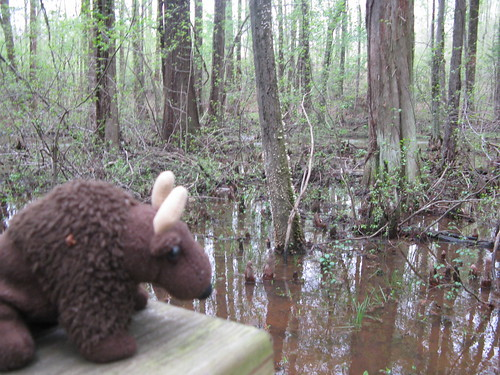Buddy at Cypress swamp