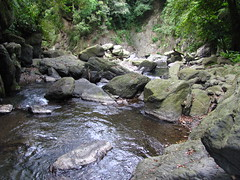 stream, water feature, creek, body of water, watercourse, ravine, wilderness, wadi, stream bed, rock,