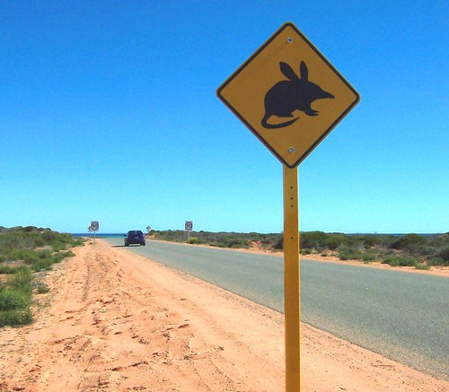 Bilby Warning