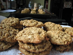 anzac biscuit, peanut butter cookie, baking, oatmeal-raisin cookies, baked goods, cookies and crackers, food, dessert, cookie, snack food,