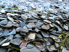 algae(0.0), sunflower seed(0.0), seaweed(0.0), flower(0.0), seafood(0.0), invertebrate(0.0), food(0.0), clams, oysters, mussels and scallops(0.0), mussel(0.0), leaf(1.0), produce(1.0), close-up(1.0), pebble(1.0), rock(1.0),