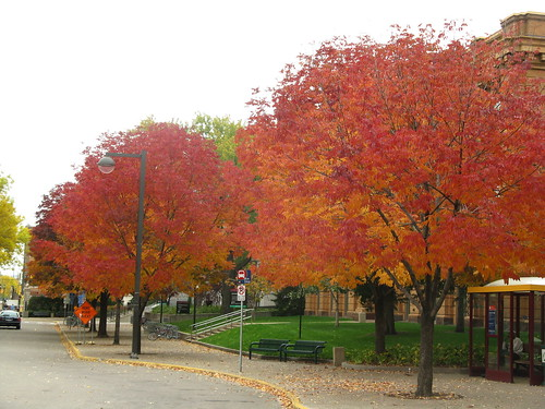 #286 - Fall trees at the U