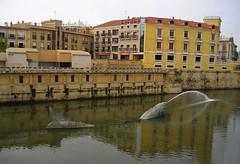 Sardina en el Río Segura
