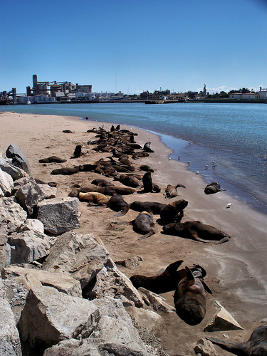 Sea Lion Colony | Lobería, Necochea, Argentina by katiemetz, on Flickr