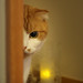 peeping cat by ritsu.w