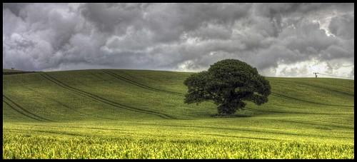 The lone tree Panoramic