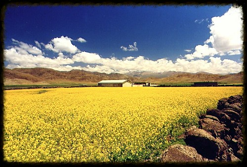 china yellow landscapes asia tibet
