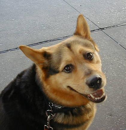 Headstrong Dog Training Com