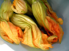 courgetteflowers02