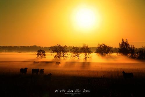 mist canada art nature fog sunrise canon photography photo foto photographie cows image quebec québec brume imapix themoulinrouge gaetanbourque 100commentgroup vosplusbellesphotos imapixphotography gaëtanbourquephotography