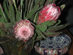 produce(0.0), food(0.0), floristry(0.0), pattern(1.0), flower(1.0), floral design(1.0), plant(1.0), flora(1.0), protea(1.0), pink(1.0), petal(1.0),