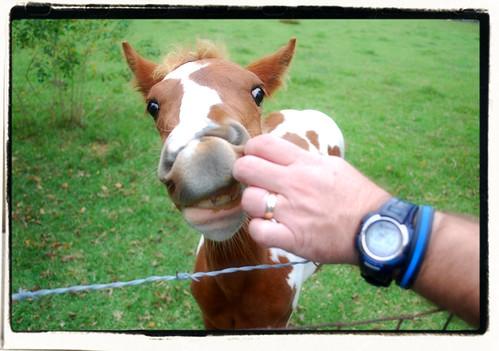 horse animal closeup mississippi paint farm teeth ms gulfport