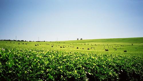 workers kenya teaplantation kericho