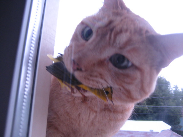 My Cat Catches a Bird