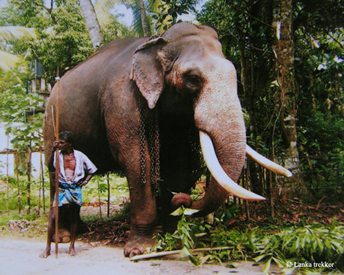 The Mahout | Flickr - Photo Sharing!