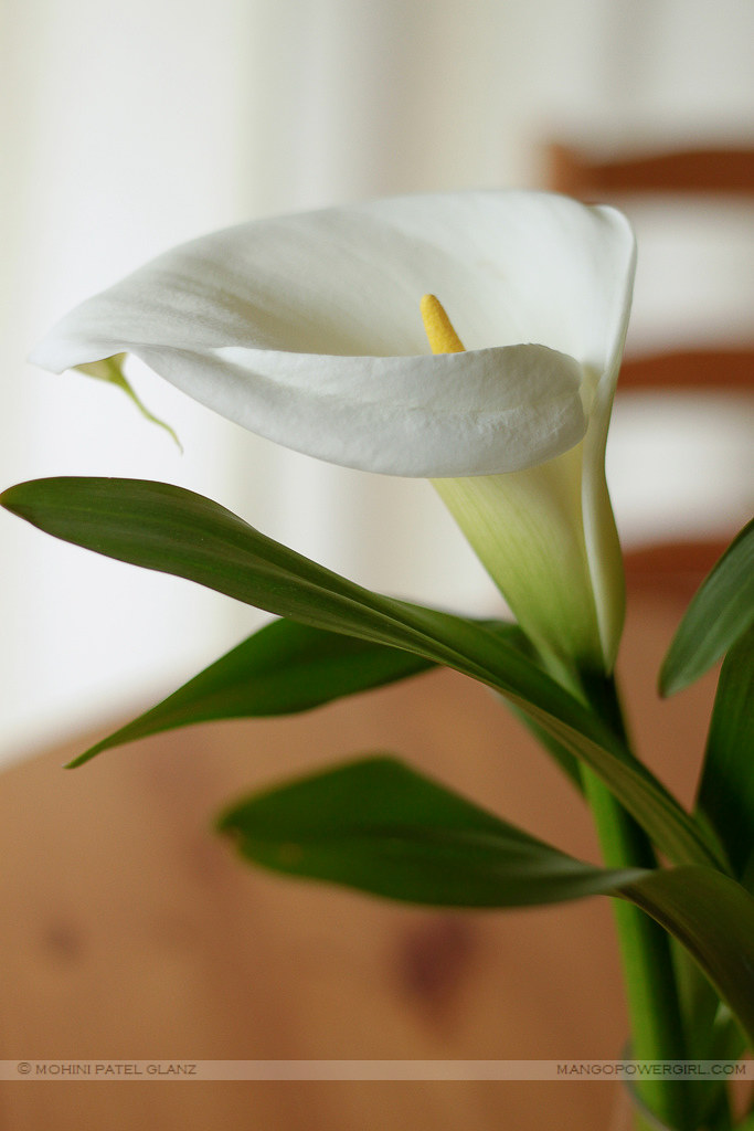 calla lily for mom