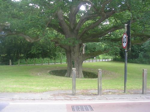Sunken tree - Hartfield