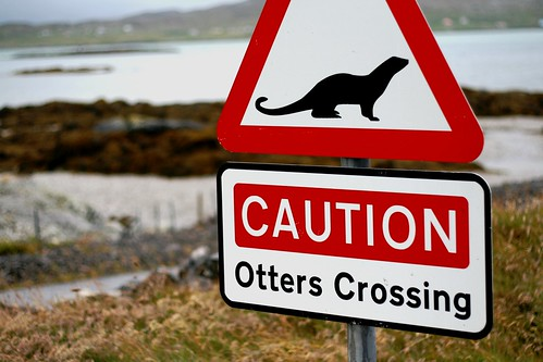 Caution Otters!