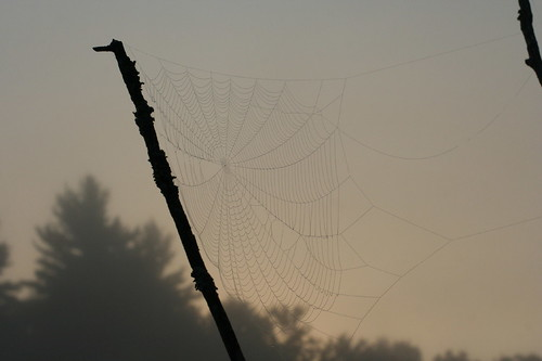 spiderweb newhampshire amherst pondparishtownforest