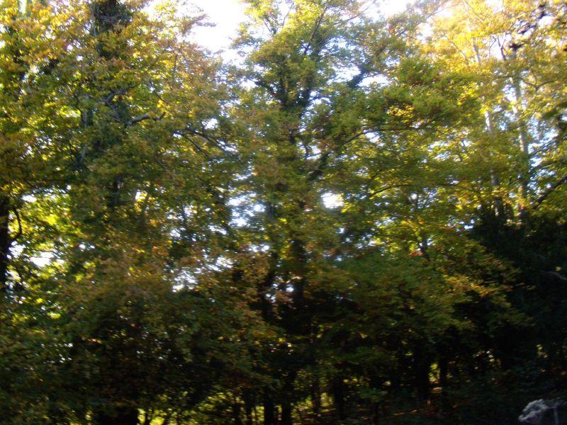 Autumn trees Pangbourne Circular