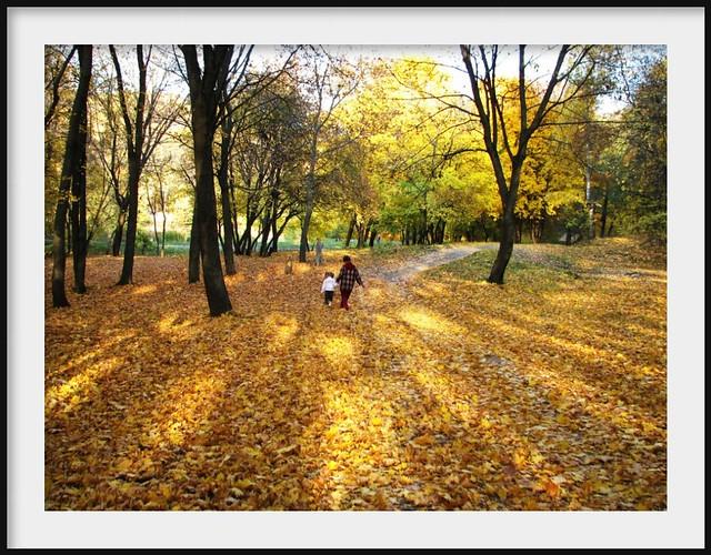 Walk in autumn wood
