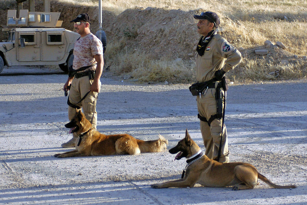 Dog Training Near Hutchinson Ks