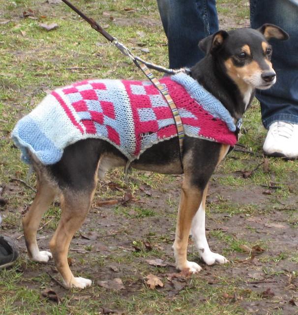 042 a dog's fine Mayday jacket