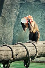 Mono adicto