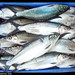 Milkfish - Photo (c) Southeast Asian Fisheries Development Center Aquaculture Department, some rights reserved (CC BY-NC-SA)