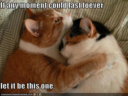 funny-pictures-cat-hug-moment-forever