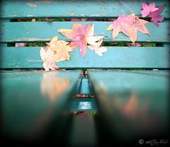Leaves on Lines